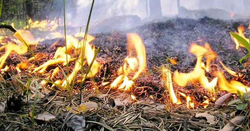 Природный пожар в районе бухты Батарейной ликвидирован
