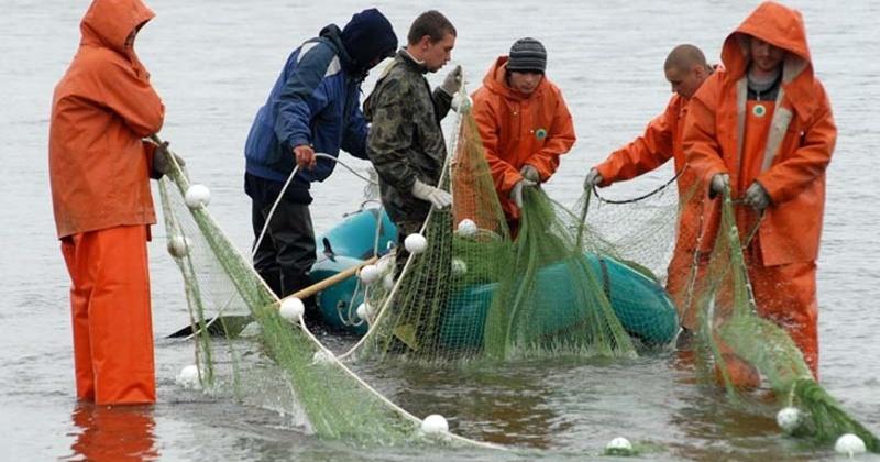 В этом году Магаданской области предстоит добыть 17 тысяч тонн красной рыбы