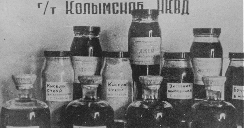 Витаминный цех для приготовления экстракта из кедрового стланика был создан в Магадане 87 лет назад