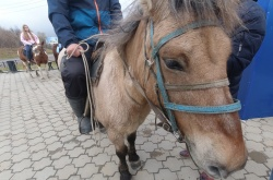 Никита Греци из Магадана отправился в путешествие на лошадях до Лондона